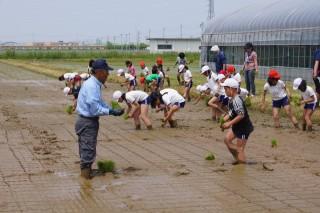 小学生による田植え風景 - 01